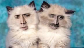 nicolas cage cat