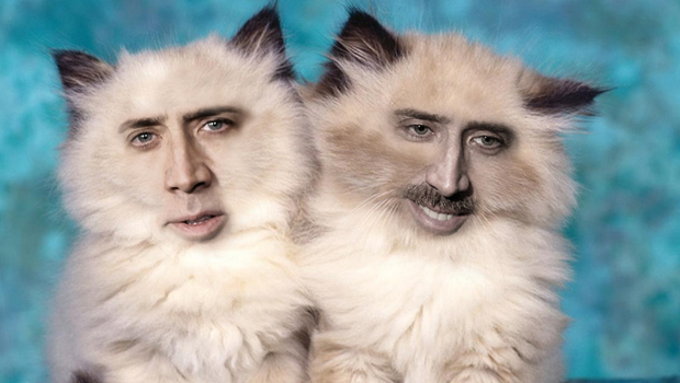 Nicolas Cage Face On Cats | www.imgkid.com - The Image Kid ...