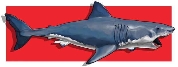 Jaws_berkaydaglar_web_1024x1024